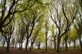 2nd May 2019  woods by the sea