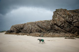 5th May 2019  hound at low tide