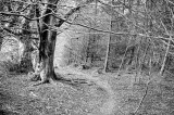 12th April 2020  path in the woods