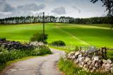 6th June 2020  greenery