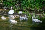 11th June 2020  swans