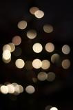 7th December 2020  Christmas tree