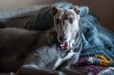 27th February 2021  happy hound
