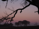 1st March 2021  purple mist