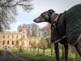 7th April 2021  hound at the palace