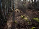 13th April 2021  friendly woods