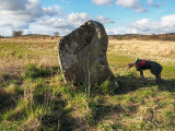 28th April 2021  megalithic hound