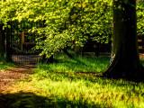 27th May 2021  shady walk