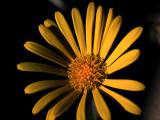 31st May 2021  yellow