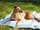5th June 2021  hot hound
