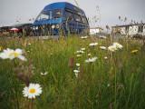 1st July 2021  flower power