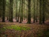 7th July 2021  dark forest