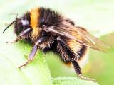 18th July 2021  bee