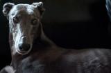 10th August 2021  hound pose