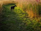 27th August 2021 long grass