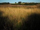 16th September 2021  golden grass
