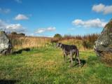 26th September 2021  megalithic hound