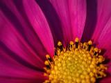 4th October 2021  last flower