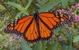 Monarch 2021