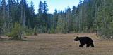 Alaska/Yukon Canada Animals