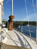 Sailing Dogs Gallery