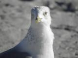Sea Gull 2/24/2021