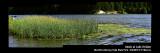 Reeds_9517-20_FPO.jpg