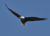 D6 Flying Wildlife