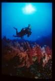 Underwater Images Gallery