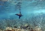 Baja Diving with Fantasea