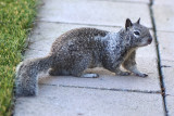 San Diego County Wildlife