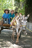 3 boys in donkey cart