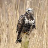 Birds of the Netherlands