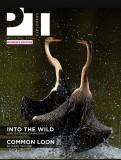 Cover story @Pawstrails,Dubai
