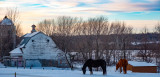 Horses in the Late Afternoon Twilight