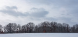 Gray Skies and Bare Trees