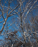 Cold Morning, Blue Sky