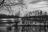 Mississippi River Tree Silhouettes