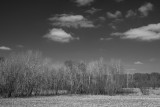 Empty Trees and Corn Stubble