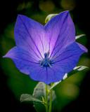 Backlit and Blue