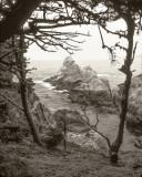 At Point Lobos