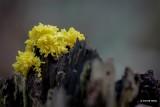 Slime molds
