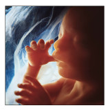 Baby Sucking Thumb in Womb sign 24 x 24.jpg