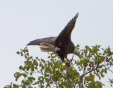 Eagle by Van H. White IMG_4724.jpg