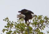 Eagle by Van H. White IMG_4725.jpg