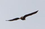 Eagle by Van H. White IMG_4760.jpg