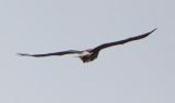 Eagle by Van H. White IMG_4762.jpg