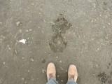 Hippo tracks, Masai Mara (2018)