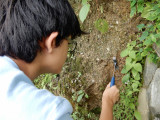 Ant prospecting in Dehradun