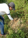 Excavating a termite mound in Dehradun
